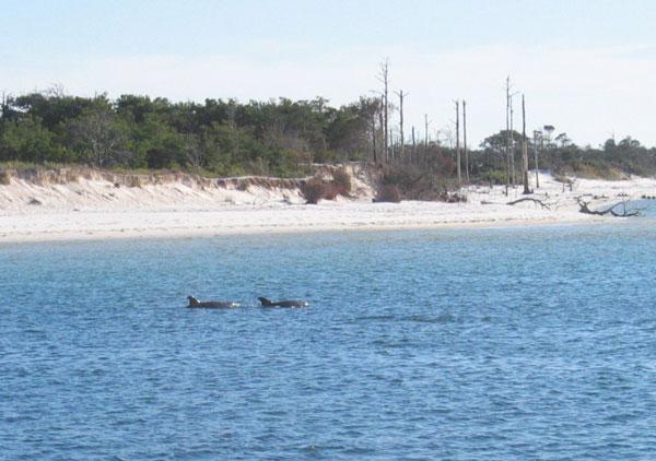 Delphin Show in feier Natur